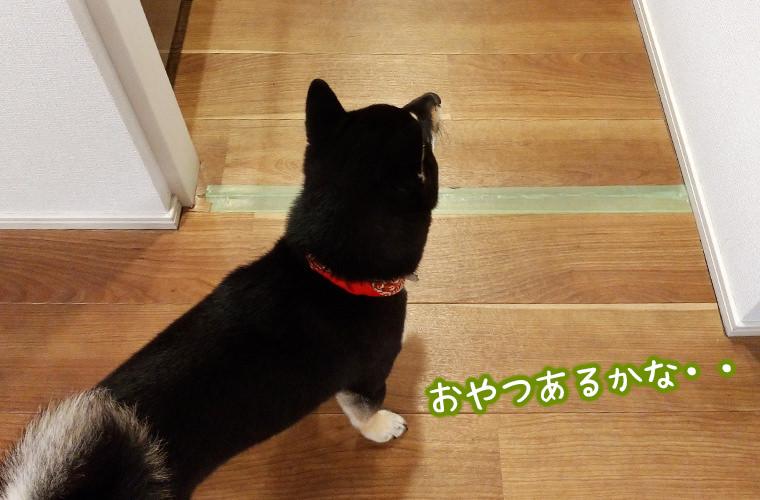 犬 ペットゲート
