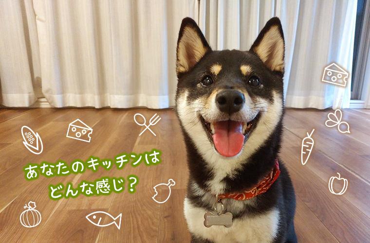 台所 ペットゲート 柴犬