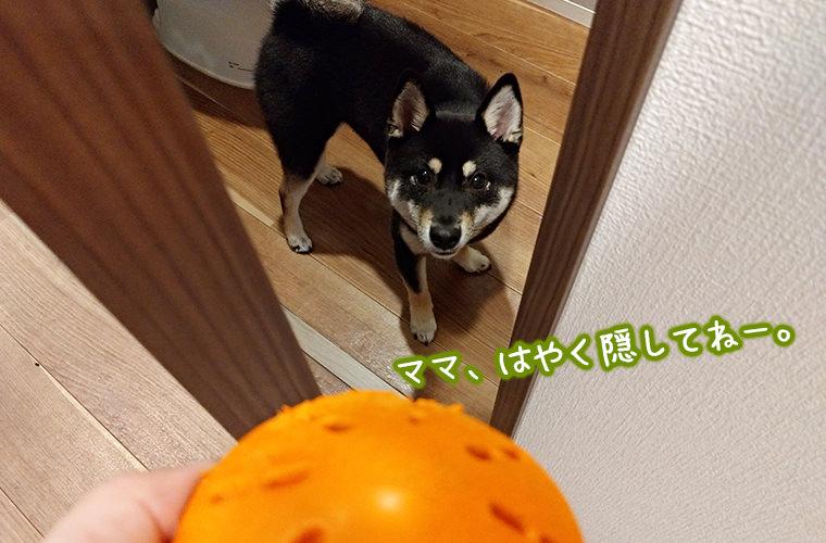 犬の宝探しゲーム 方法