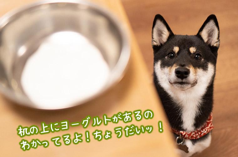 犬にヨーグルトをあげる時の注意点