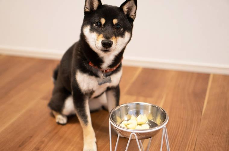 林檎 犬 メリット 栄養