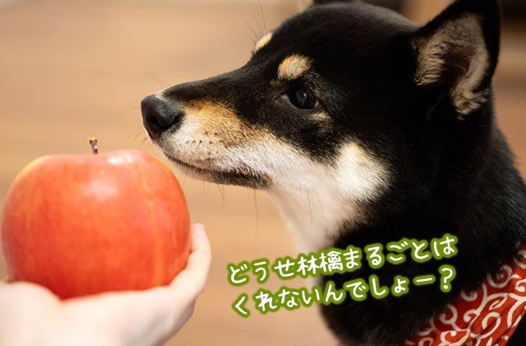 犬に林檎を与える 食べても良い