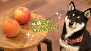 林檎 栄養 犬 注意点
