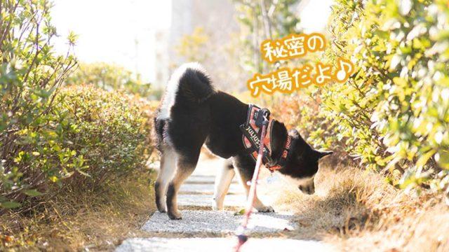 犬と穴場スポット 人気スポット