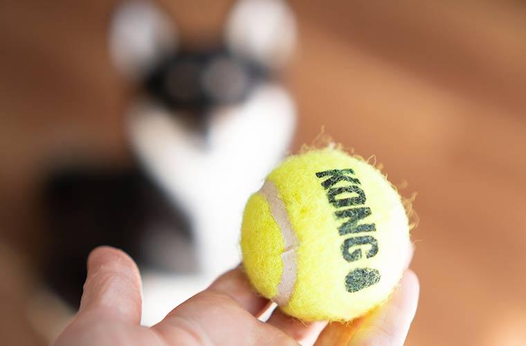 テニスボールと犬のシルエット