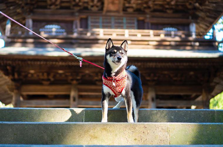 北鎌倉の円覚寺 写真 撮影