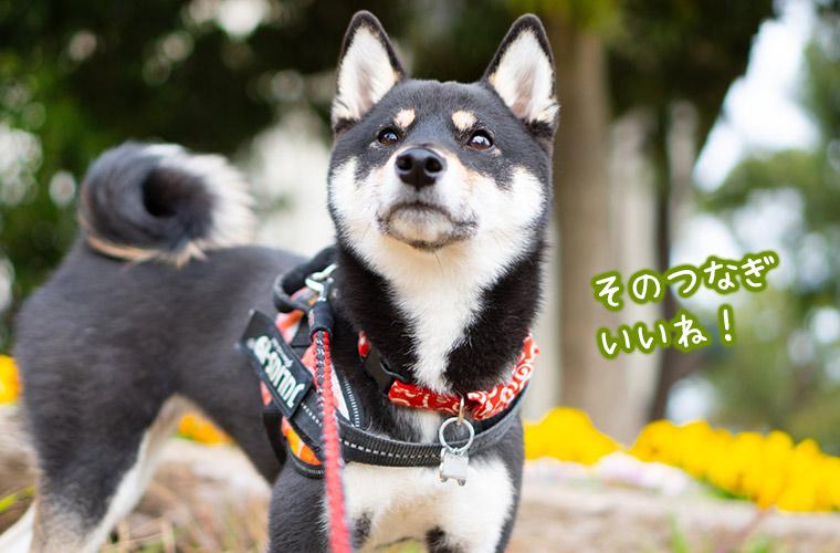 犬のお散歩時のファッションやウェア