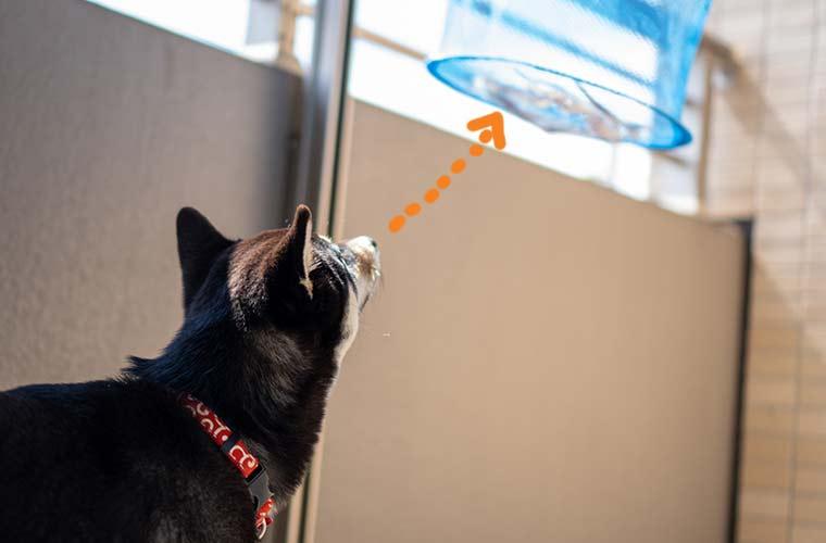 牛アキレスを見る犬の写真 干し網