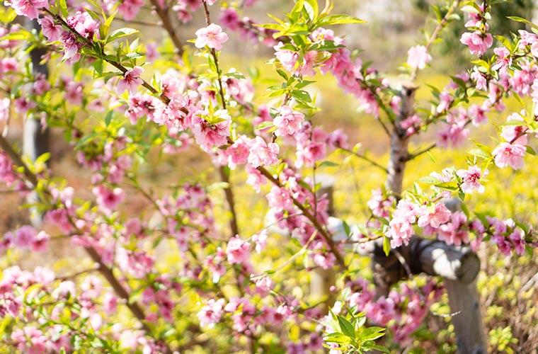 春の花の写真 photo