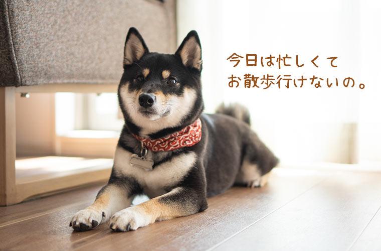 散歩嫌いな犬の写真