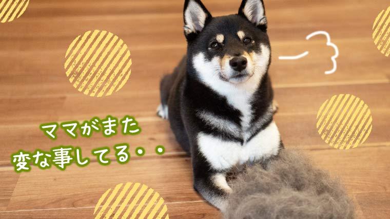 犬の毛玉で遊ぶ ぬいぐるみ