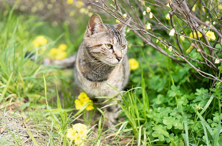 公園にいた野良猫の写真