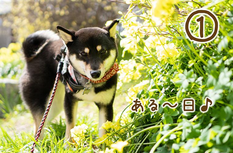 犬と黄色い花
