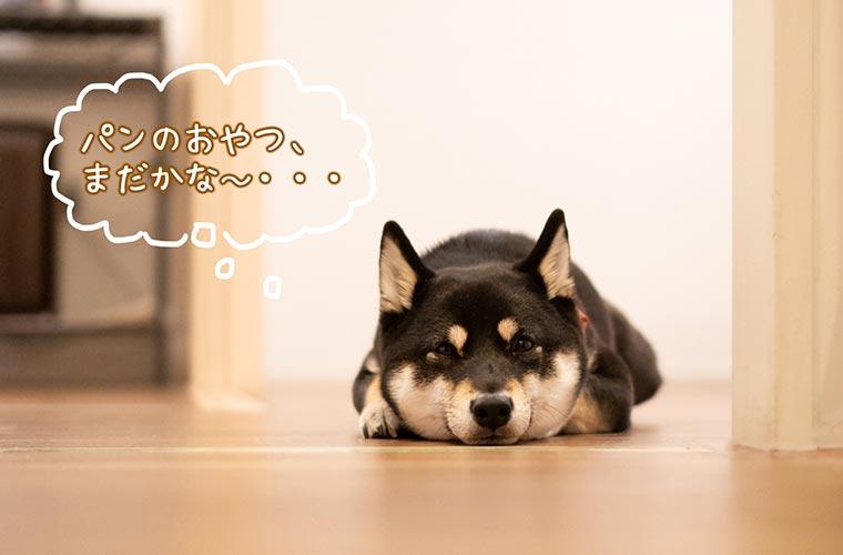 家にいたツチノコの犬
