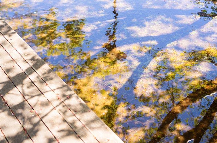 水溜まりと景色