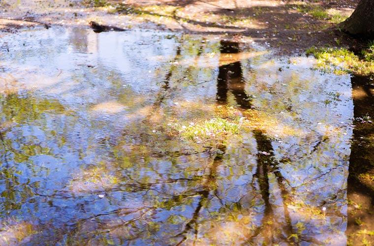 綺麗な水面の写真