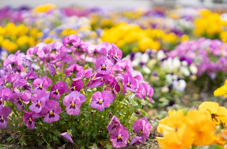 春の花の写真
