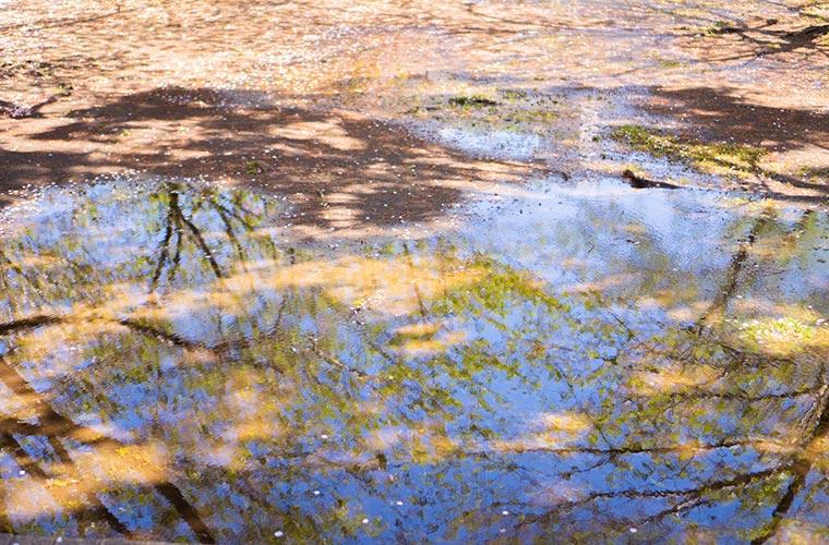 花びらの地面と水溜まり