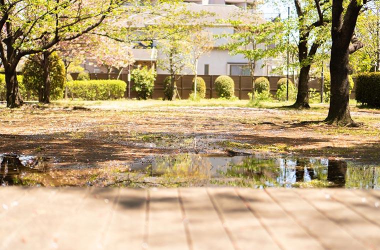 庭の水溜まり