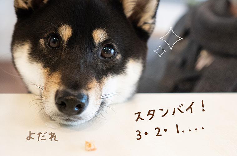 ヨシを待つ犬の写真