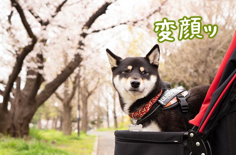 変顔する犬の写真