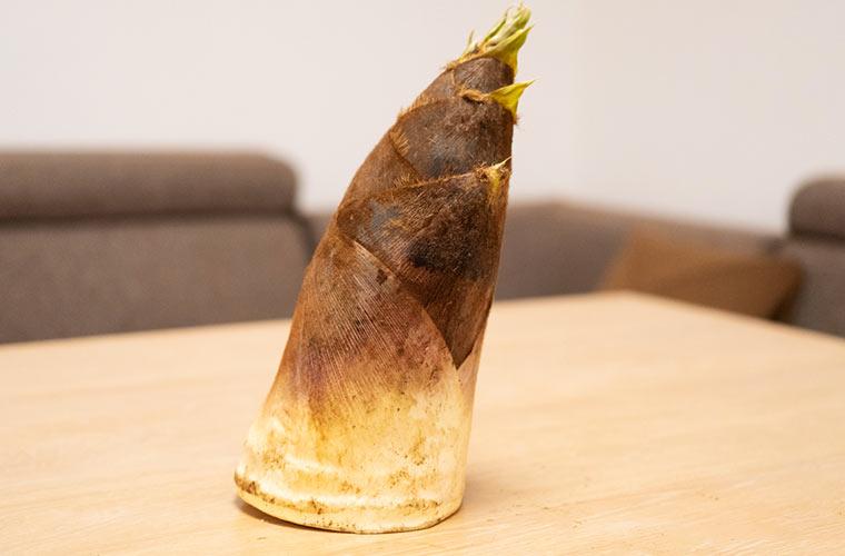 朝採れのタケノコ 旬の筍