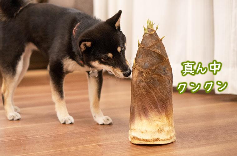 犬とタケノコ