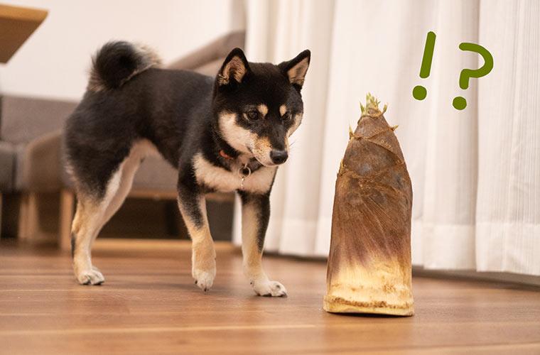 筍と犬の写真