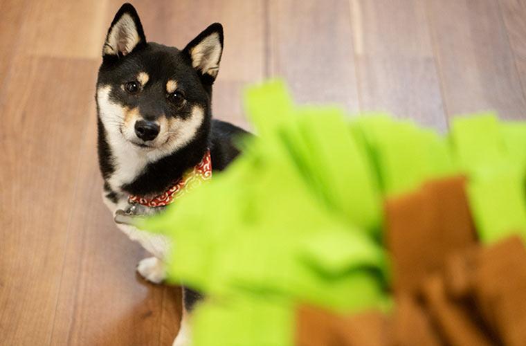 ノーズワーク おもちゃ 犬