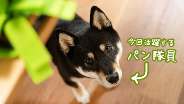 ノーズマット 認知症予防 犬