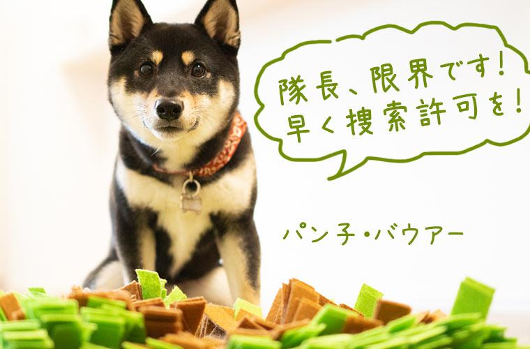 犬のトレーニングマット