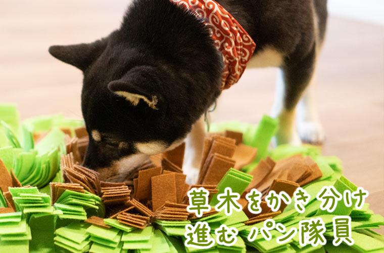 ノーズワークのおもちゃで遊ぶ柴犬