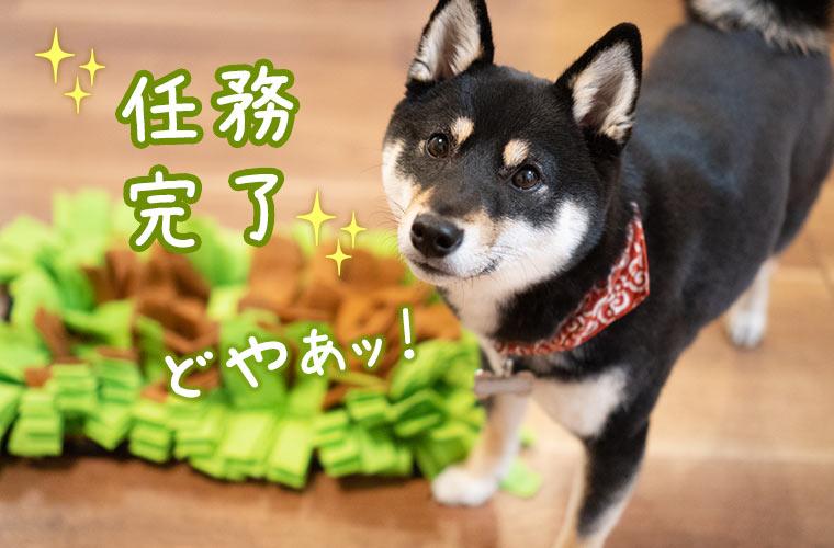 ペット 犬の鼻用毛布 柴犬