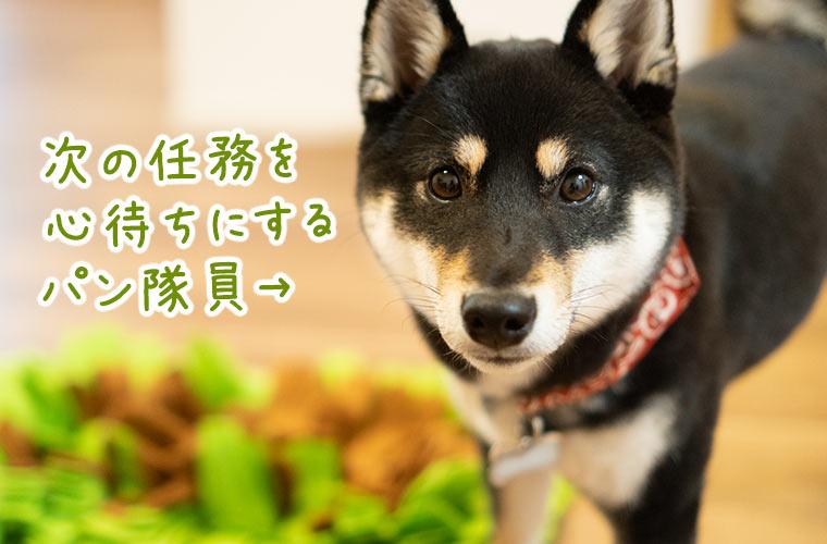 ノーズワーク 犬 マット
