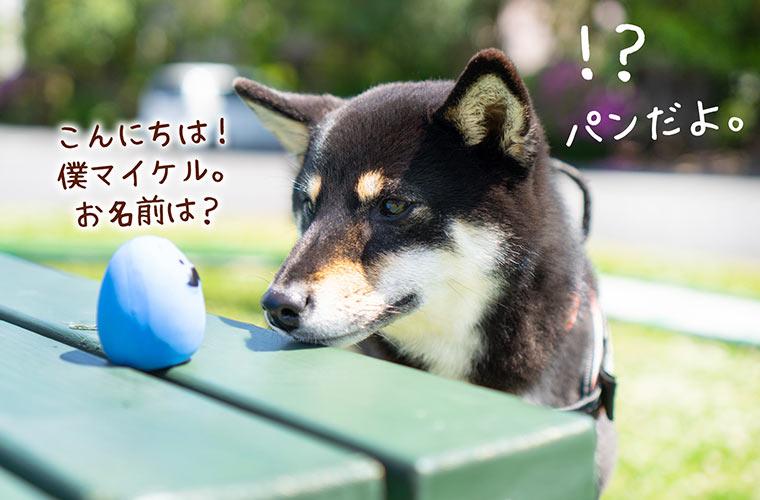 柴犬とボール