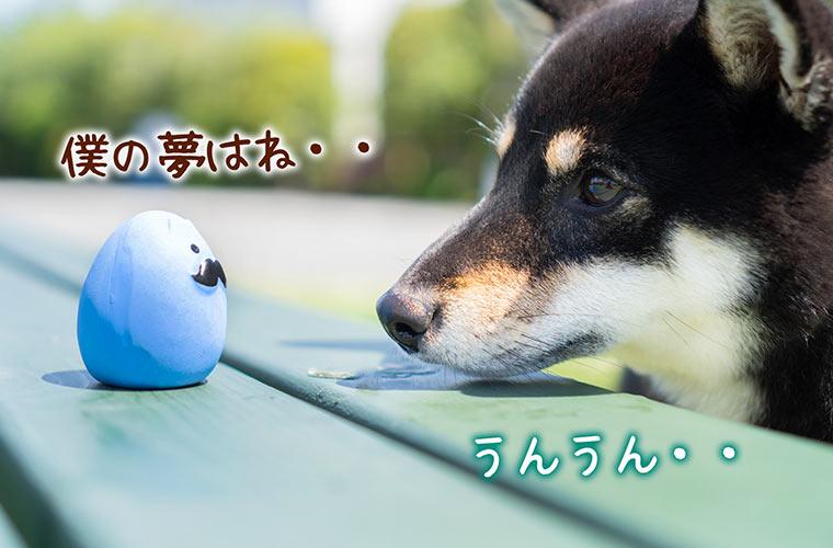 青い卵型ボールと黒柴の写真