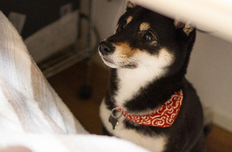 おやつを待っている犬の妖怪