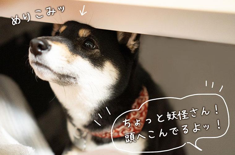おやつが欲しい犬の写真