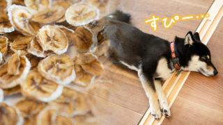 バナナチップのおやつと犬