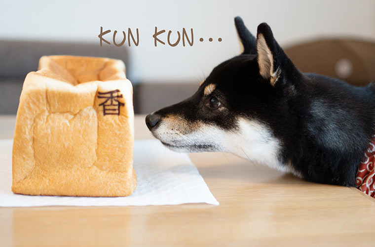 食パンの香をかぐ犬