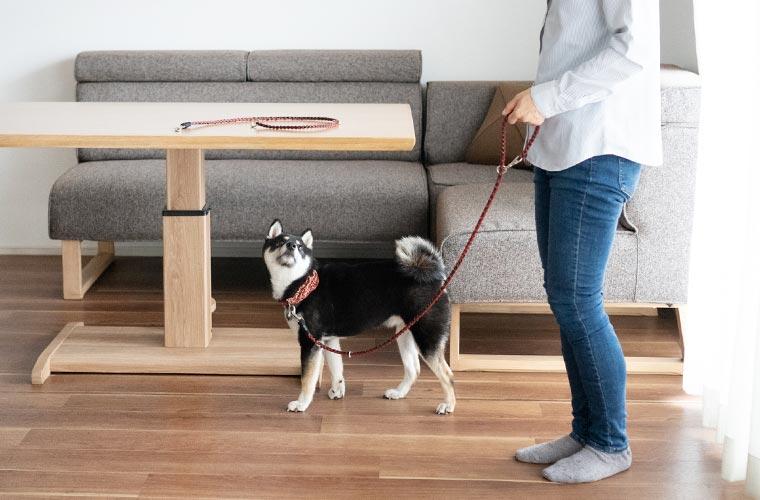 短い犬のリード