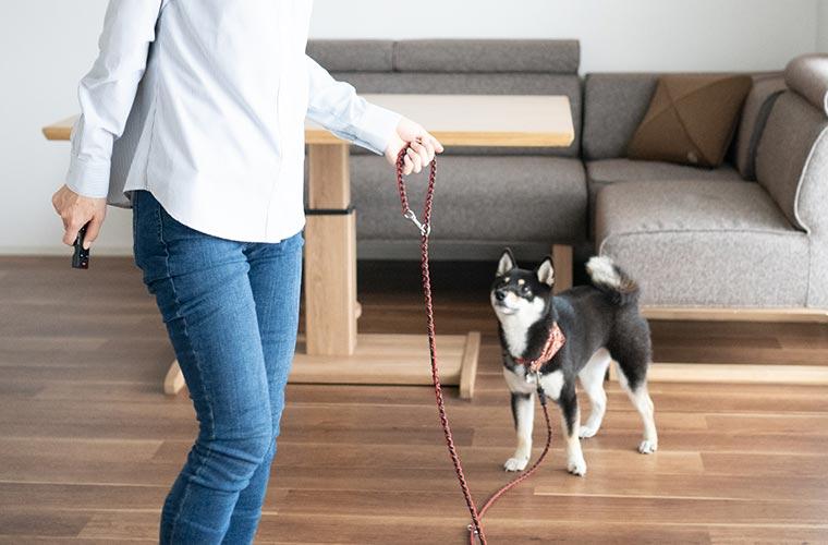 リードで犬と散歩する飼い主
