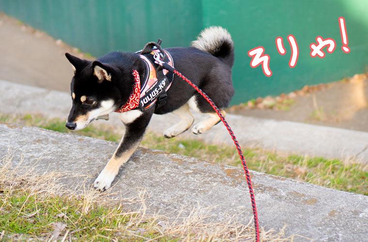 人気な犬のリード 散歩