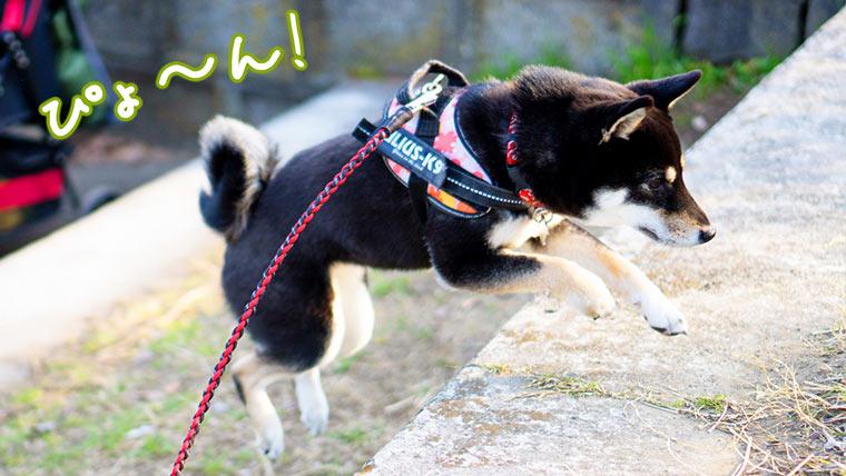肩掛けリード 犬 柴犬