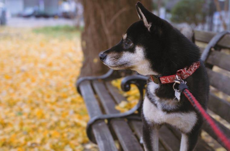 秋のベンチ 犬 落ち葉