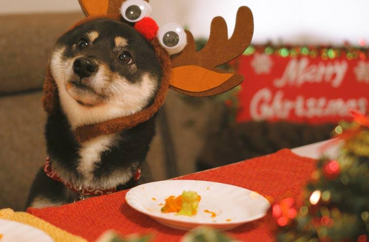 クリスマスのトナカイ 犬
