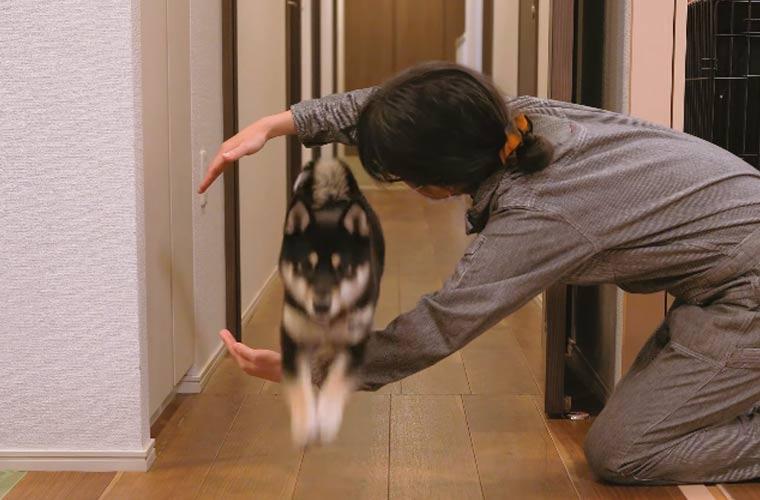 犬の芸 コマンド