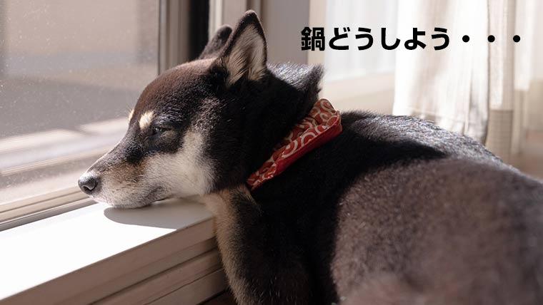 鍋を心配する柴犬