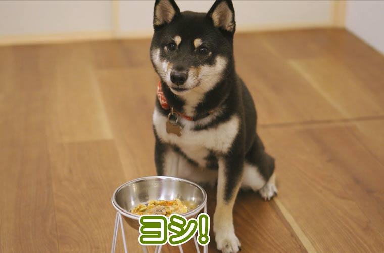 犬の手作りご飯 ごはん