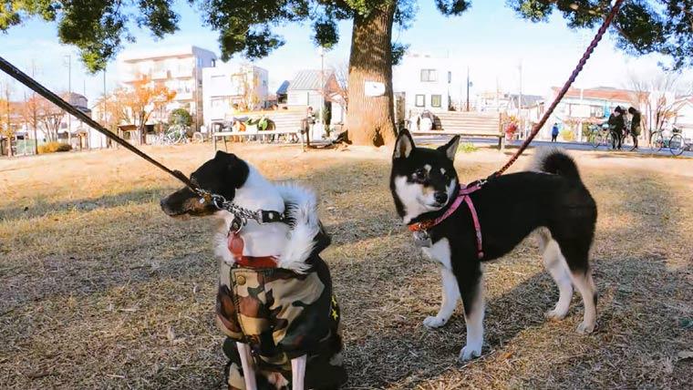犬と友達ワンコ